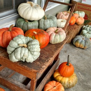 porcelain doll pumpkins